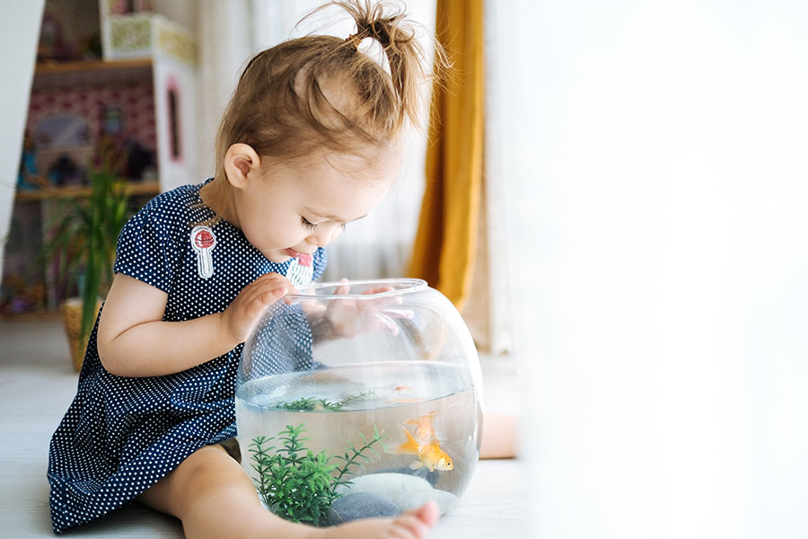 girl-feeding-goldfish