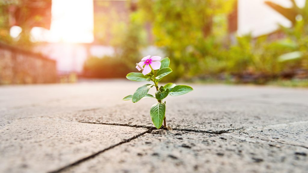 a flower growing through the pavement