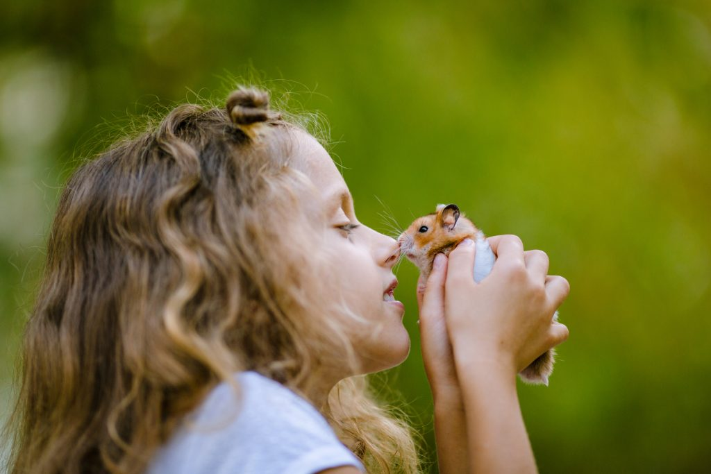A little girl with a hamster in her hands as she presses its nose to her nose.